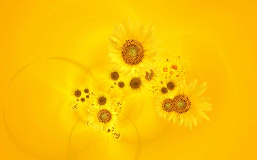 bright_yellow_sunflowers-wide
