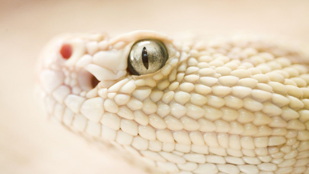 dangerous_snake_1080p_hd-hd