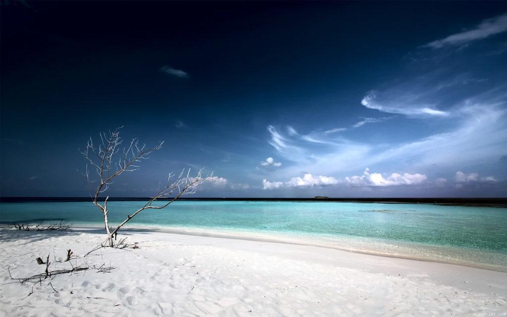 dead_tree_beach-wide