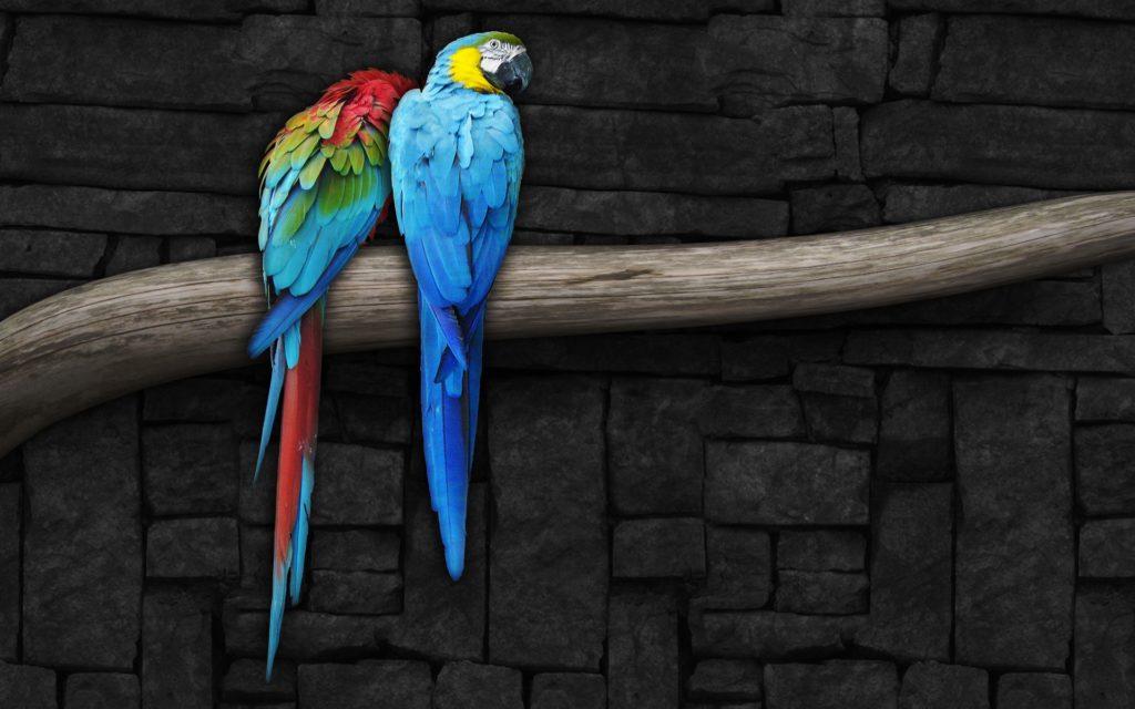 pair_of_parrots-wide