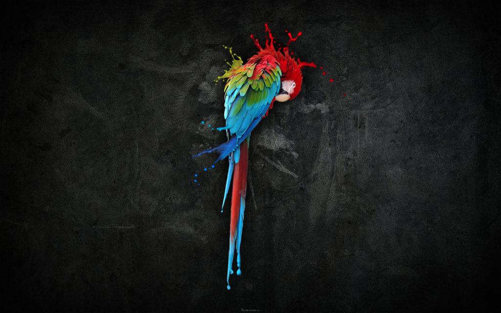 pretty_parrot_splash-wide