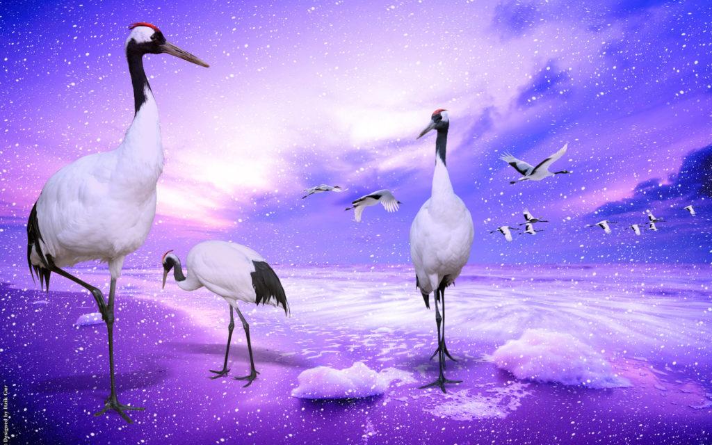 red_crowned_cranes_japan-wide