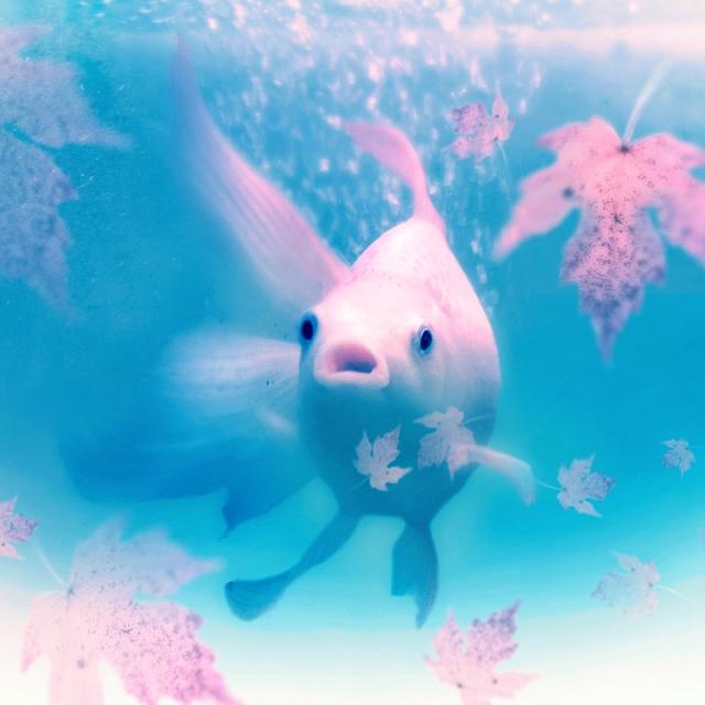 underwater autumn