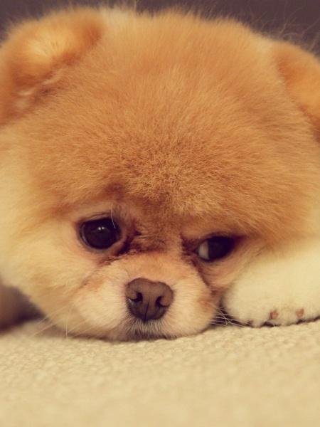 Akito Pup