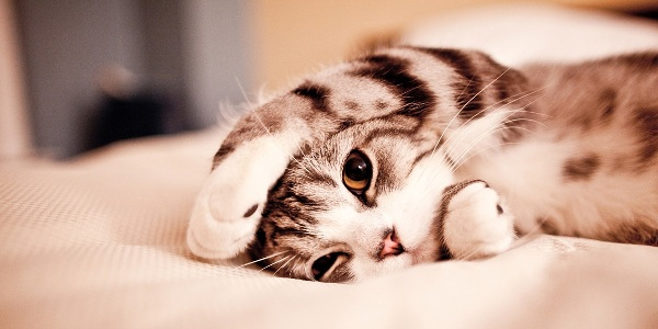 Cat-in-bed: 30 Adorable Animals Twitter Cover Photos