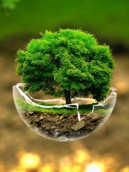 Green Nature Tree