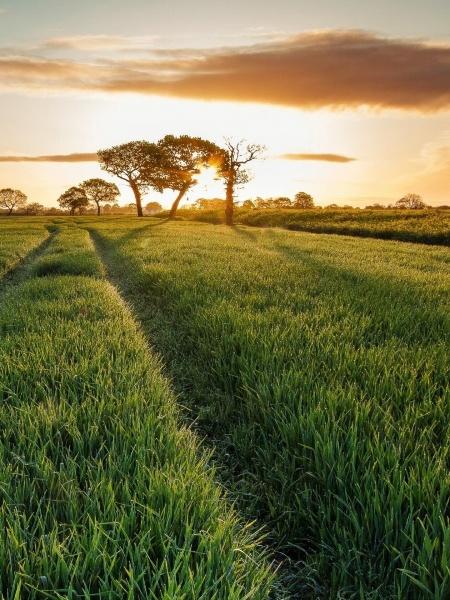 Landscapes Grass