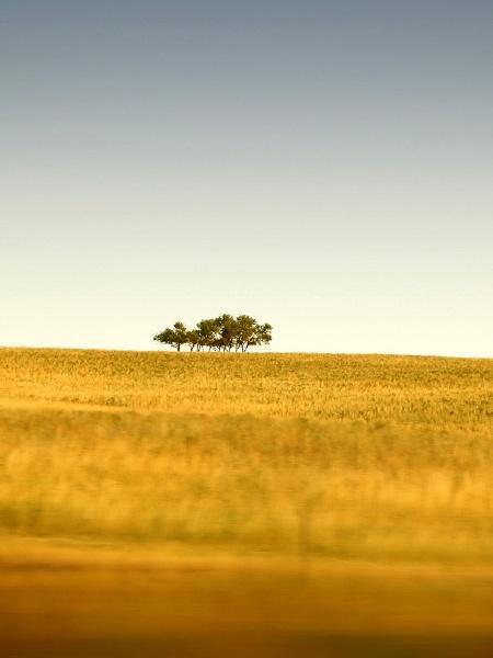 Trees Fields